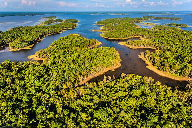 Ascensores Zener comprometidos con el medio ambiente. Protección de los bosques de April Salumei